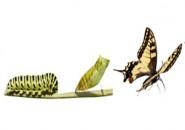 Kelebeğin Rüyası…